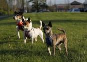 3-ezy-dog