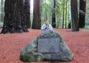 jenn-and-big-trees